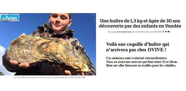 Une huître géante découverte en Vendée !