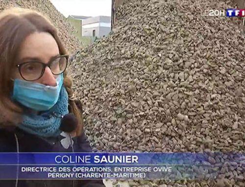 [TF1] La seconde vie insoupçonnée des coquilles d'huîtres