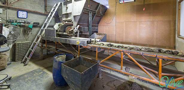 Ovive : l'entreprise qui recycle les coquilles d'huîtres en écailles pour la volaille